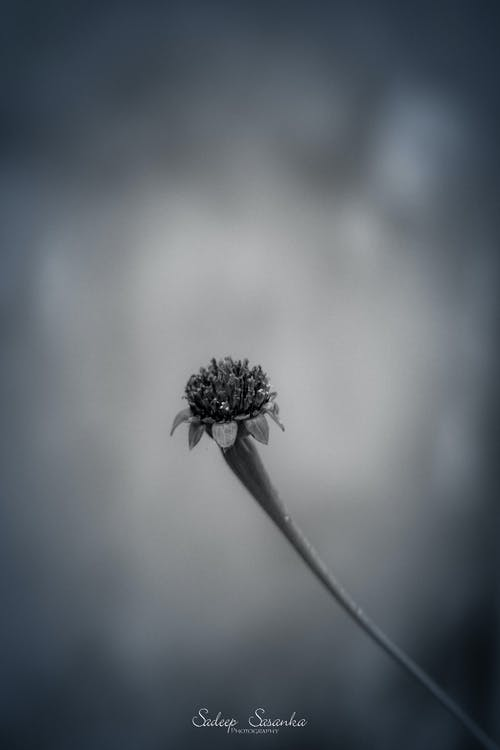 blomma, moder natur, natur