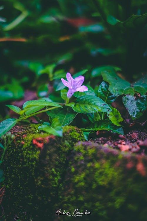 一束花, 大自然, 斯里蘭卡