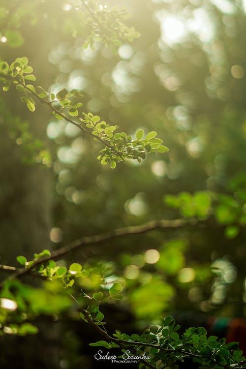 fotografia przyrodnicza, matka natura, park krajobrazowy