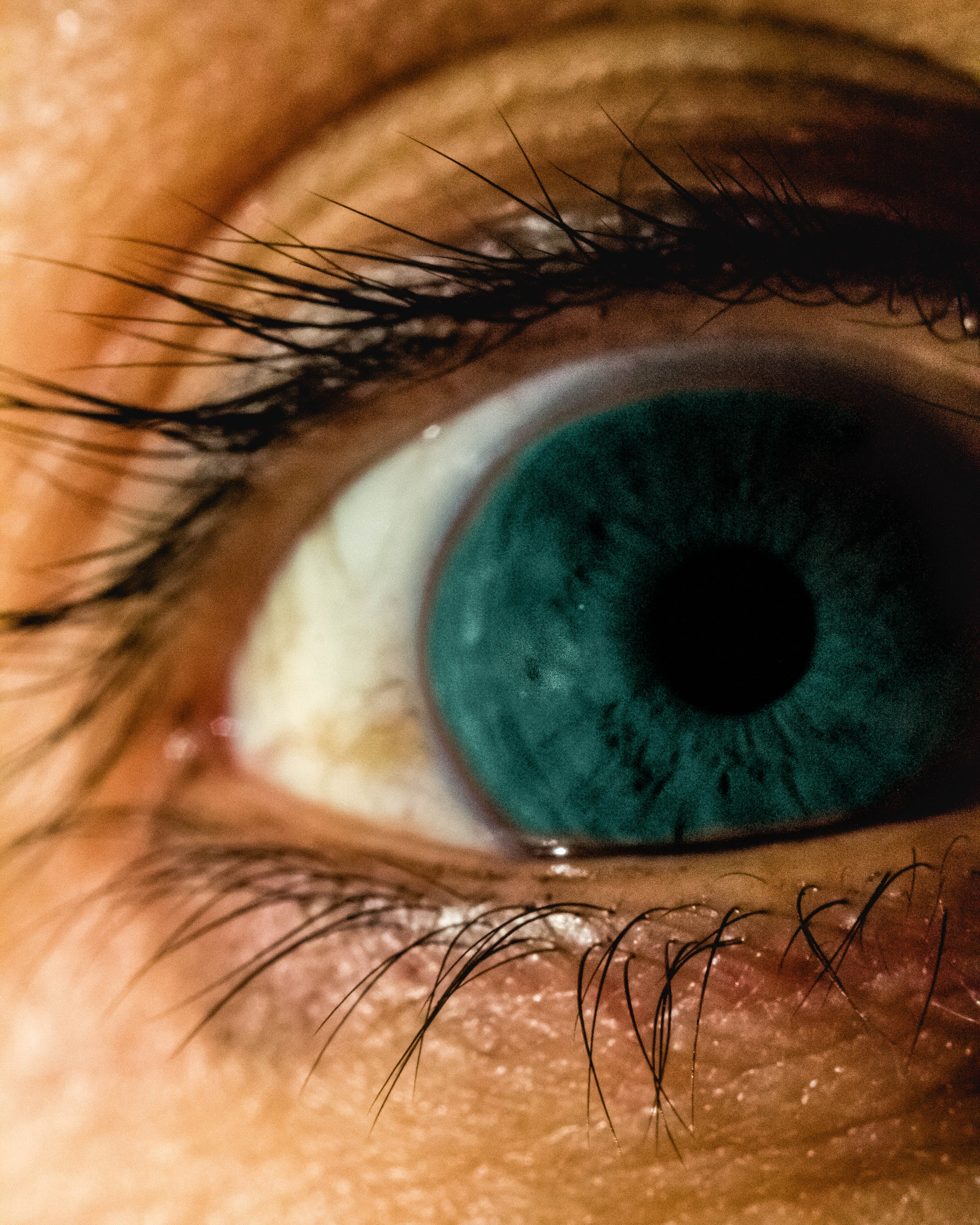 Free stock photo of blue eyes, eye, eyelashes, macro