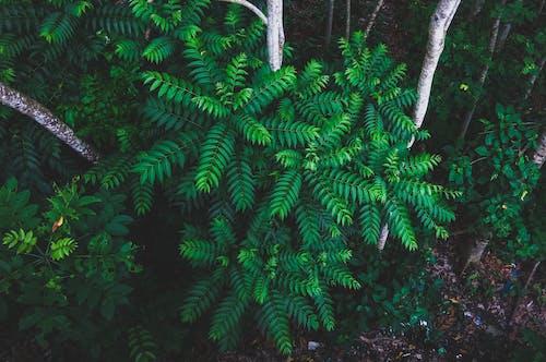 シダ, フローラ, 乾燥した葉, 木の無料の写真素材
