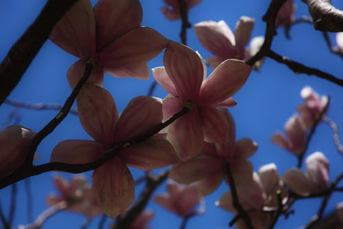 Free stock photo of flowers, sky, sunlight, tree