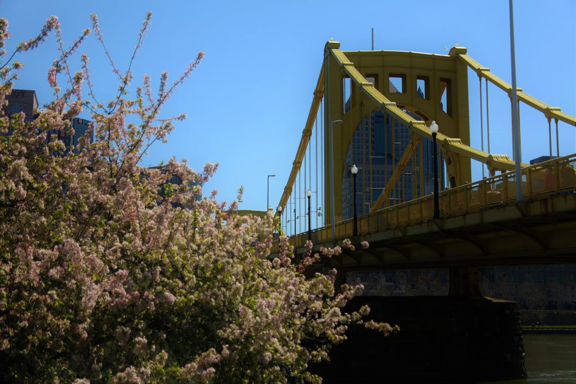 bridge, downtown, flowers