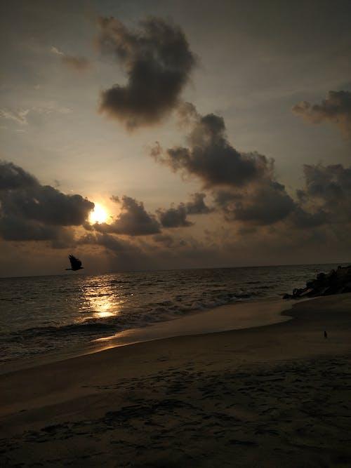 Free stock photo of #bird, beach, beachlife, clouds