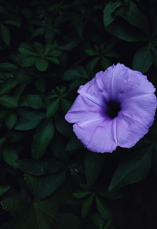 Gratis arkivbilde med 4k-bakgrunnsbilde, blomst, blomsterbakgrunnsbilde, blomsterblad