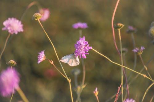 Photos gratuites de champ, champ de fleurs, magnifiques fleurs, papillon