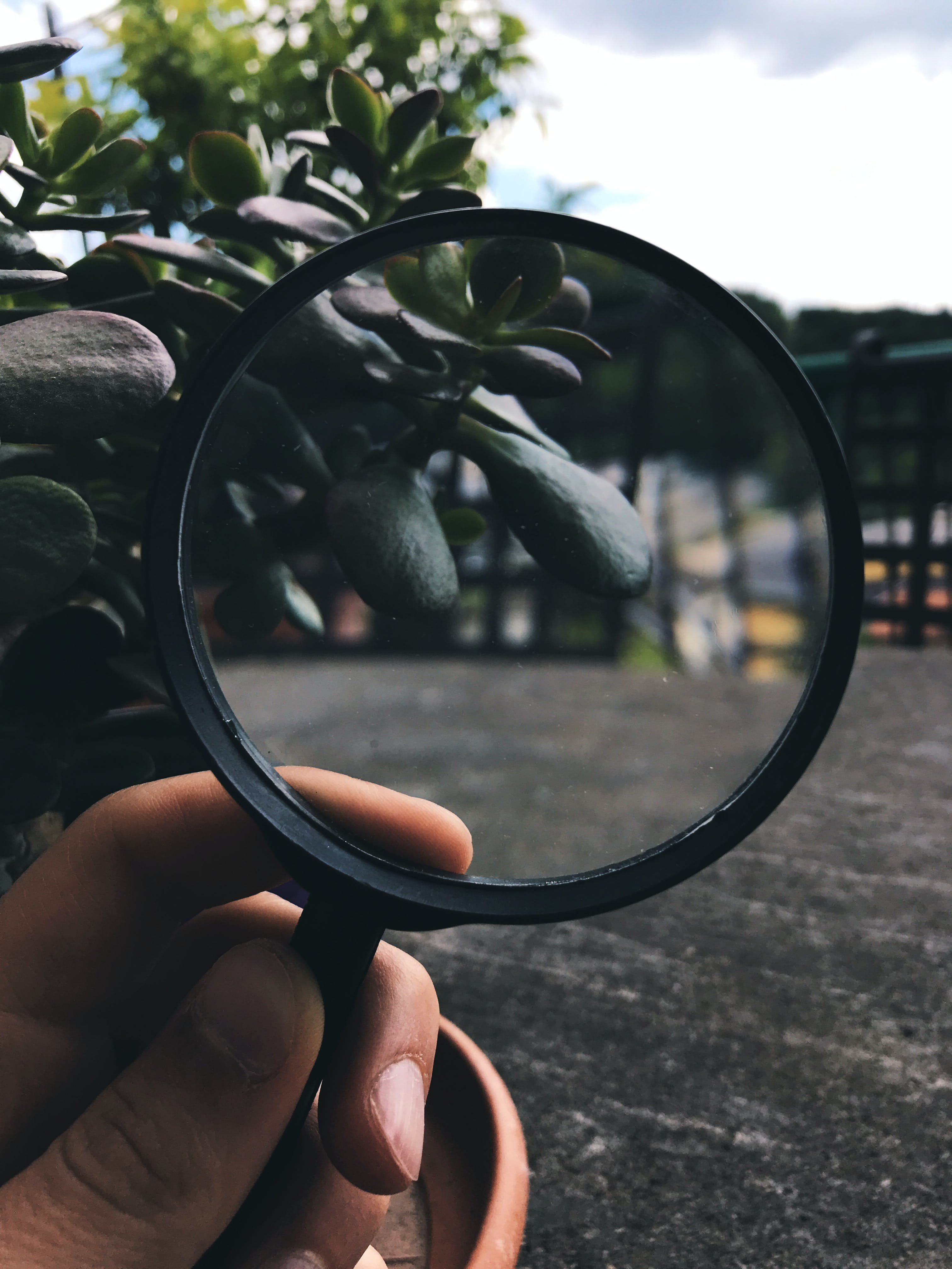 Free stock photo of green, lens, mother nature, nature