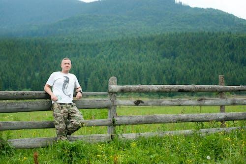 Foto d'estoc gratuïta de arbres, avets, bosc, boscos
