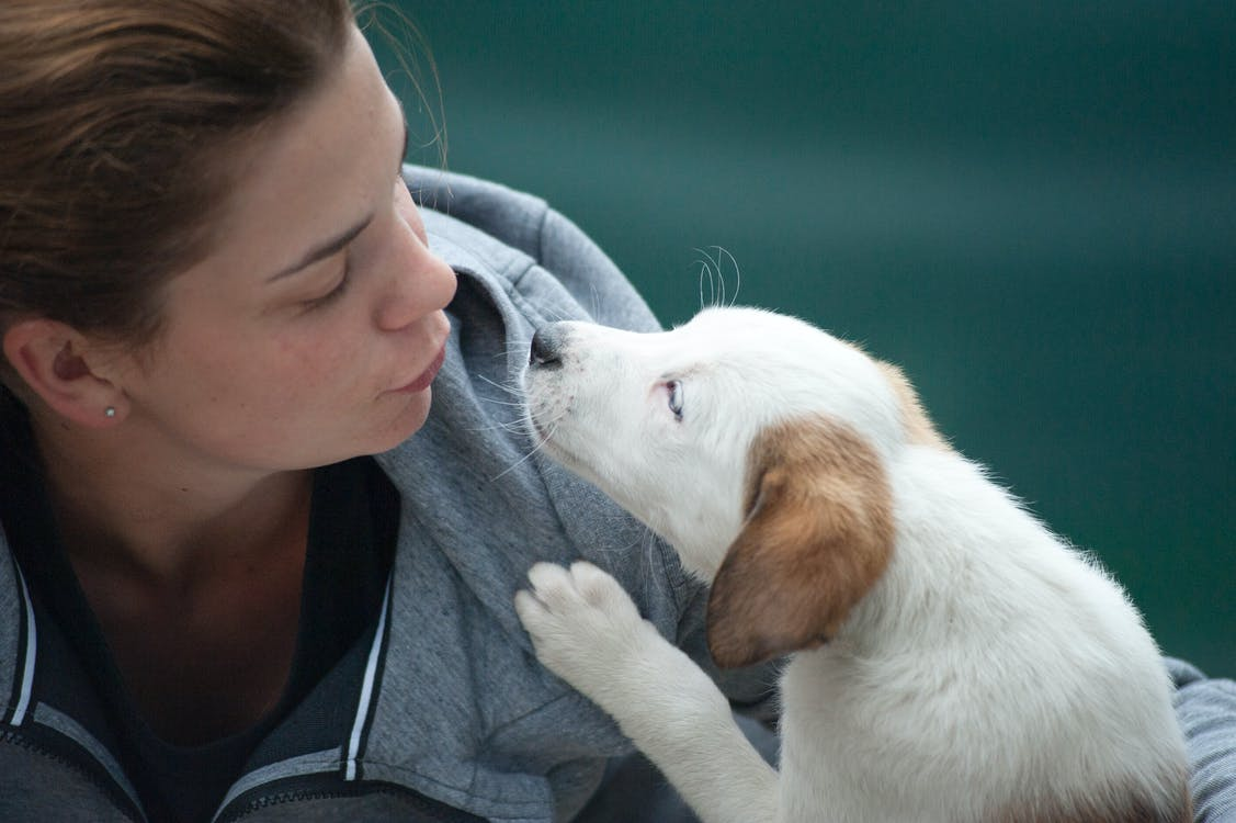 Woman Wearing Gray Jacket Beside White Puppy