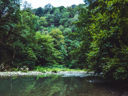Foto d'estoc gratuïta de aigua, arbres, bonic, bosc