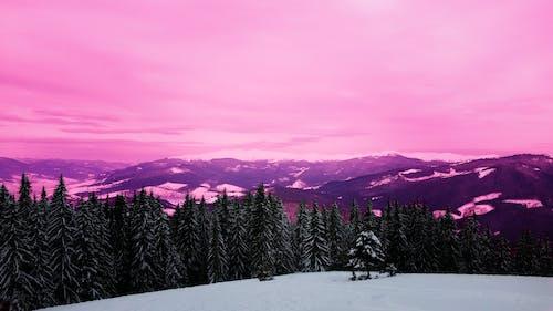 Бесплатное стоковое фото с #лес, гора, пурпурное небо, пурпурный