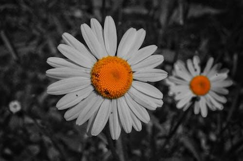 Foto stok gratis #hutan, alam, bunga, fotografi monokrom