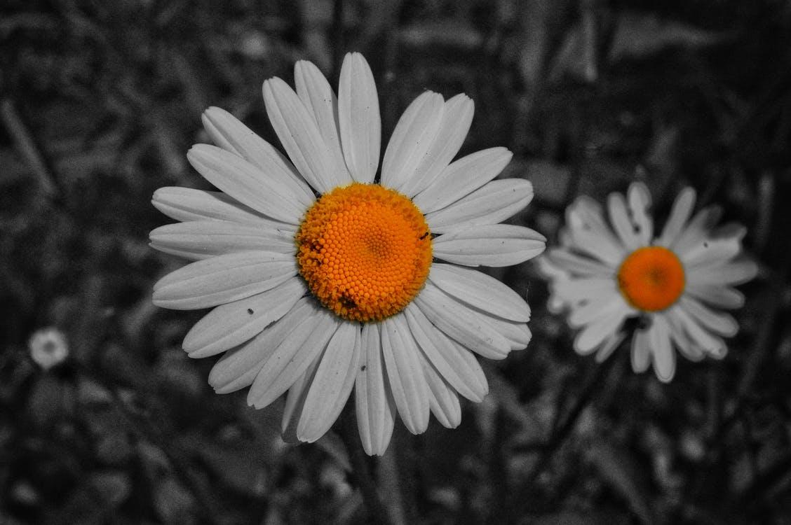 #hutan, alam, bunga