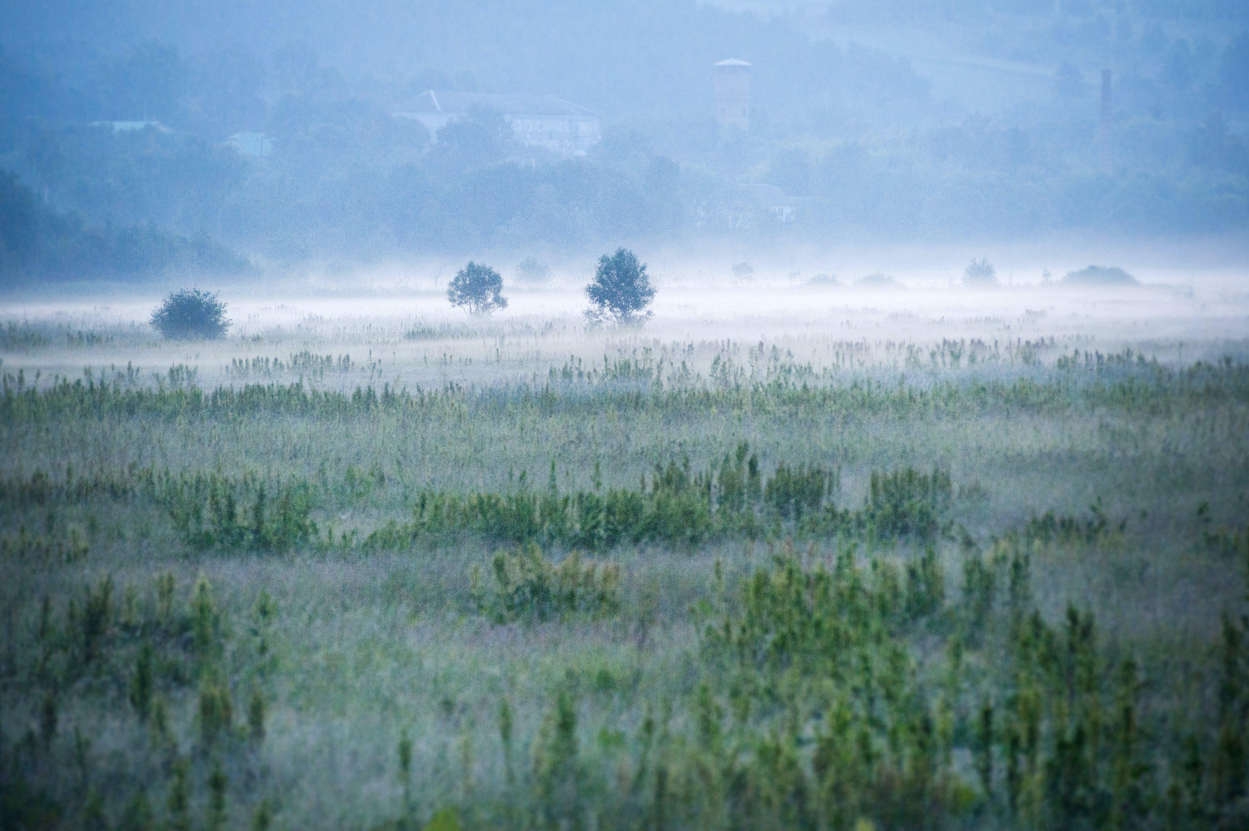 Foggy Green Field