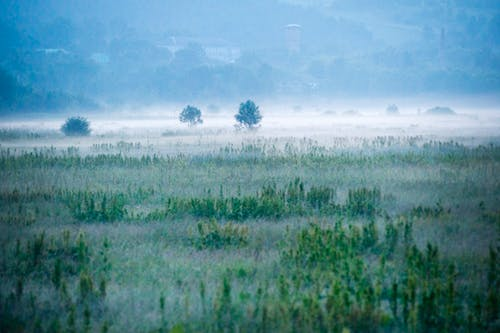 Бесплатное стоковое фото с голубое небо, голубой, деревья, дневное время