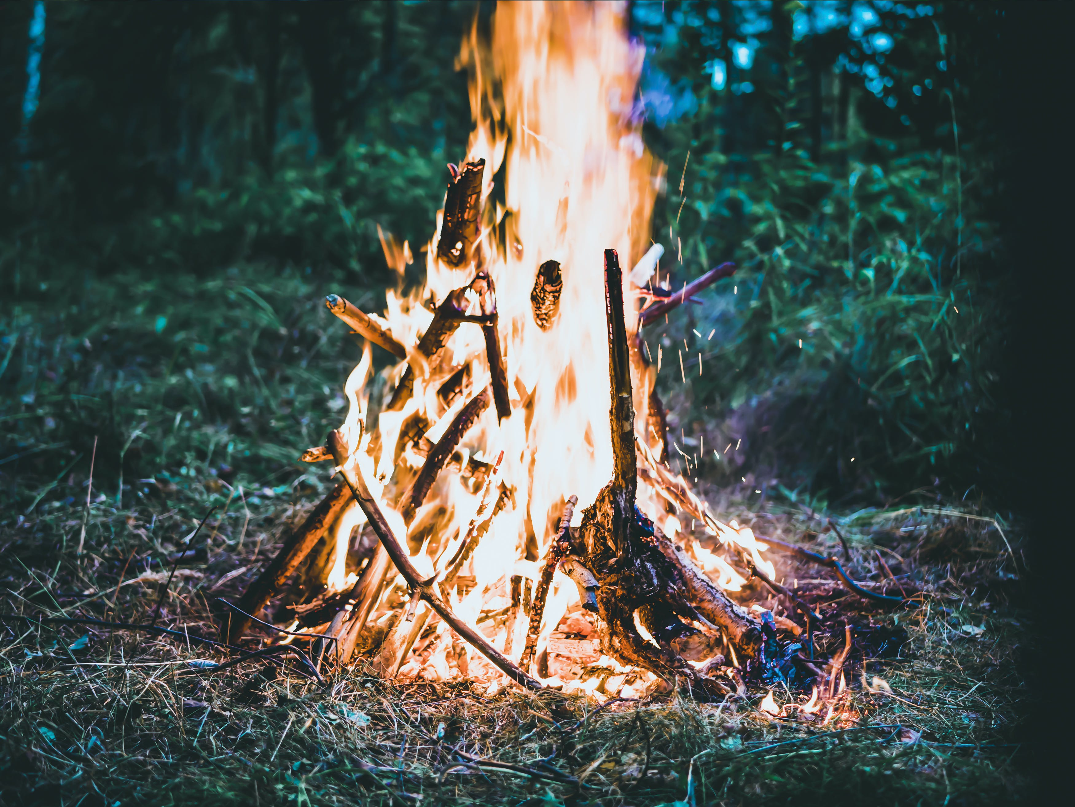 Bonfire on Forest Screengrab