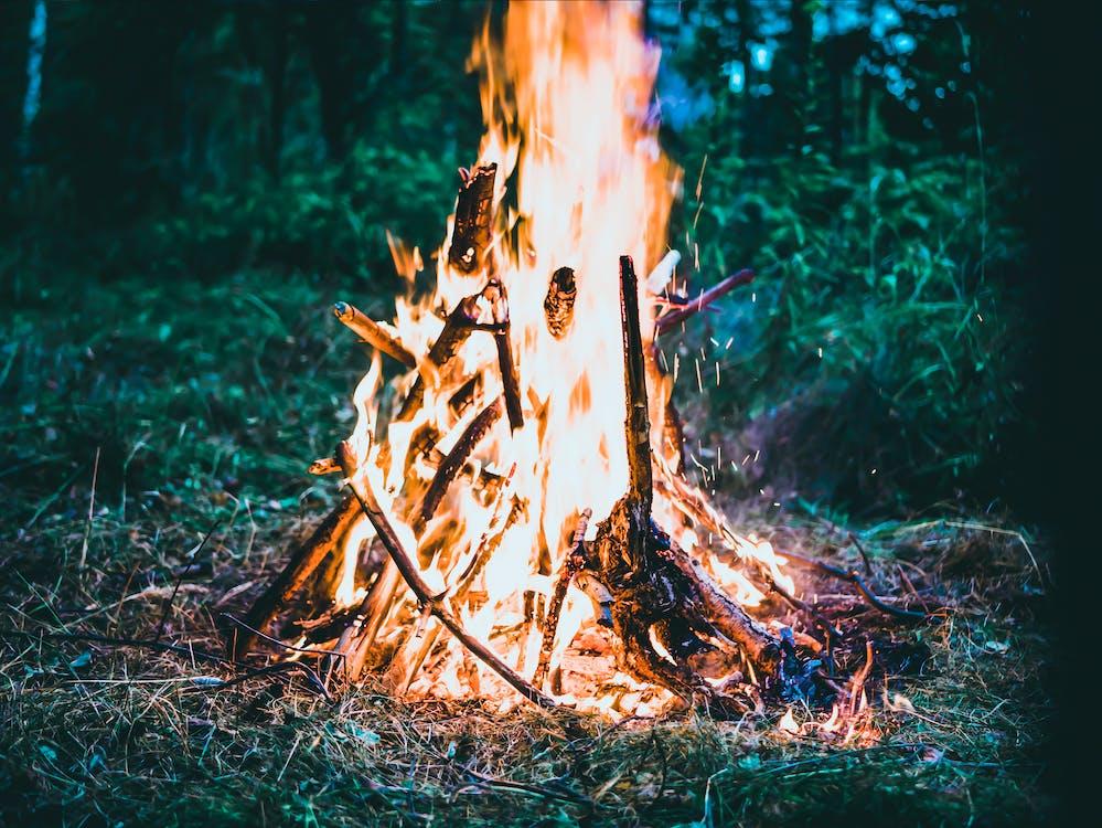 arbres, ardent, atractiu