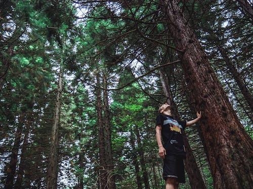 Homme Regardant Le Haut De L'arbre