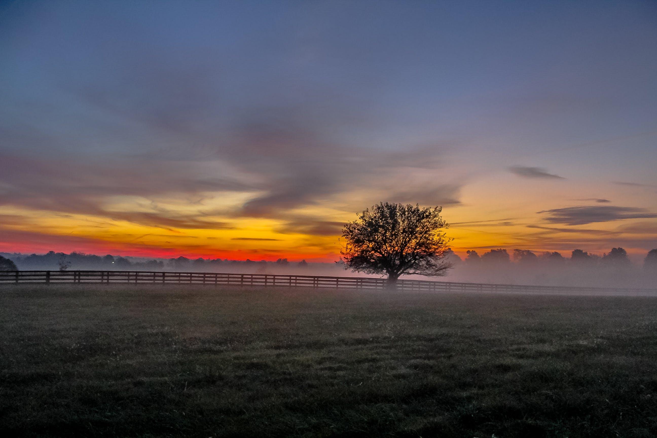 Foto d'estoc gratuïta de alba, arbre, camp, capvespre
