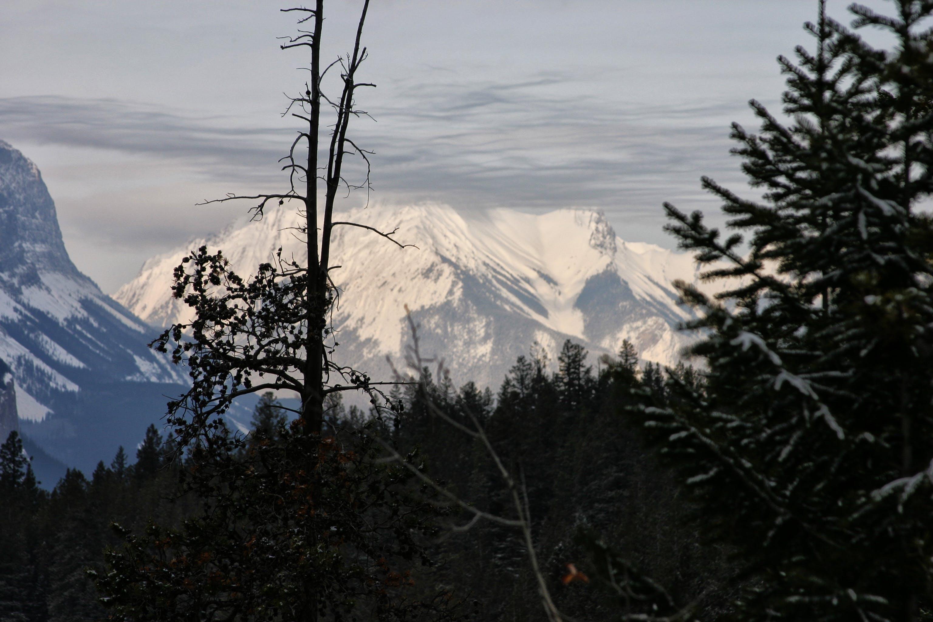 Free stock photo of mountain, silhouette, snow, trees