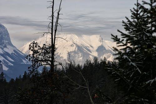 Gratis stockfoto met berg, bomen, sneeuw
