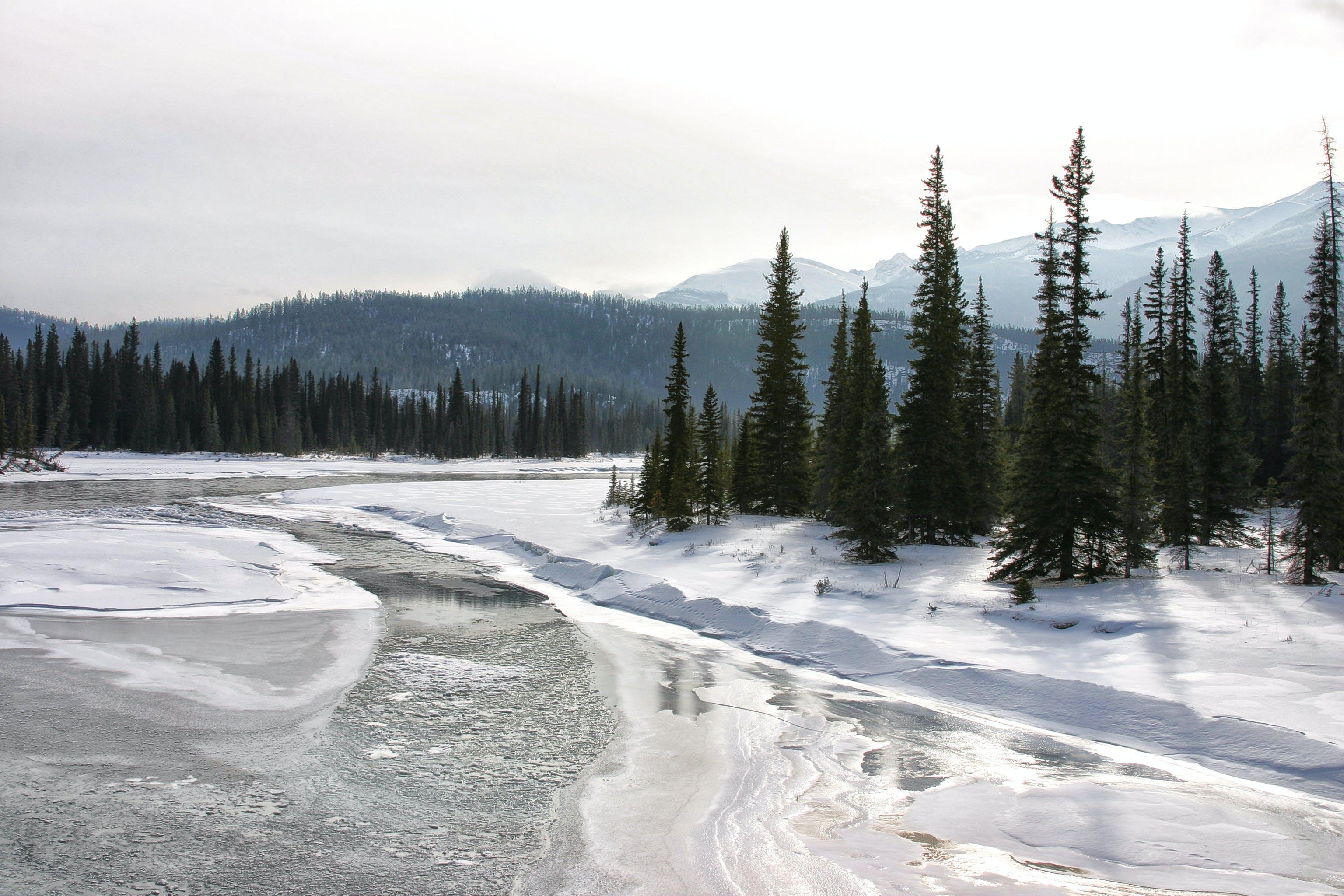 Free stock photo of frozen, mountain, snow, trees