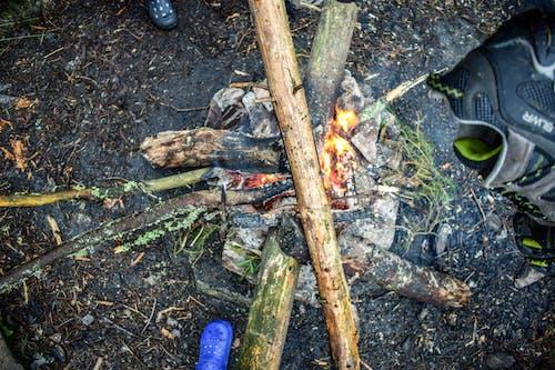 Gratis arkivbilde med brann, skog, skogbrann