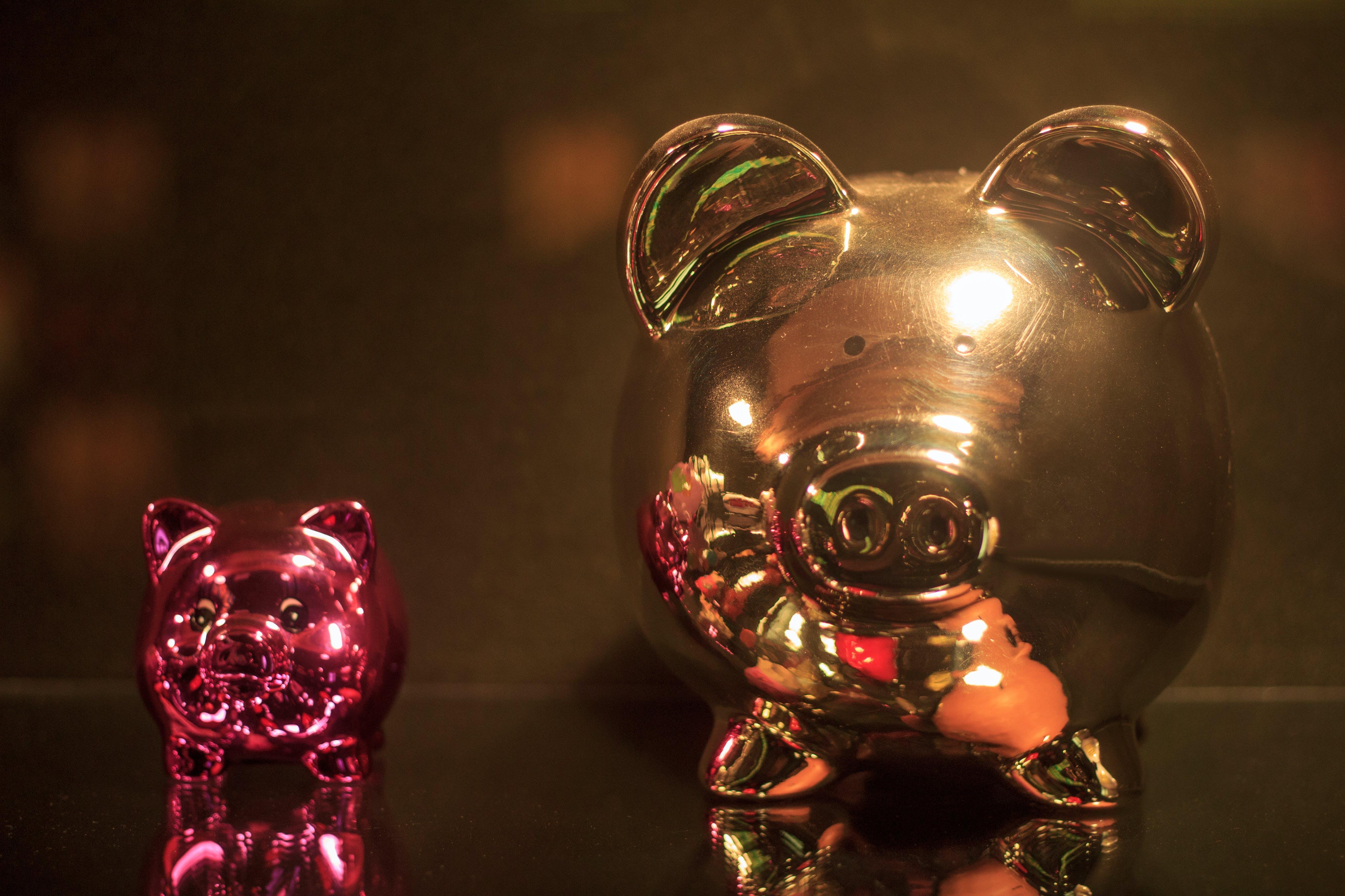 of pig, piggy bank