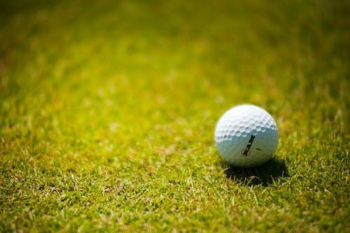 Ingyenes stockfotó fű, Golflabda, gömb, labda témában