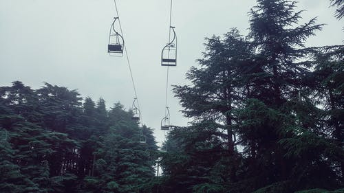 Free stock photo of cable car, fog, forest, pine