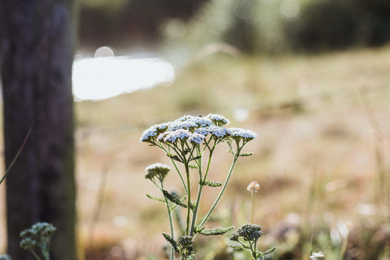 Ảnh lưu trữ miễn phí về cận cảnh, hệ thực vật, hoa, môi trường