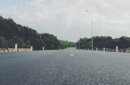 Kostnadsfri bild av asfalt, landskap, träd, väg