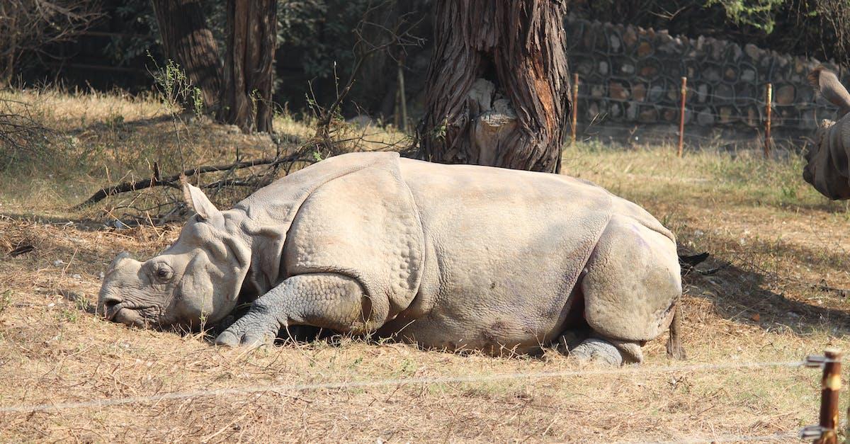 Носорог фото и описание