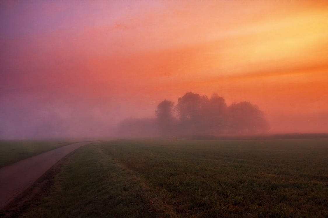Grey Concrete Road Surrounded by Green Field and Fog