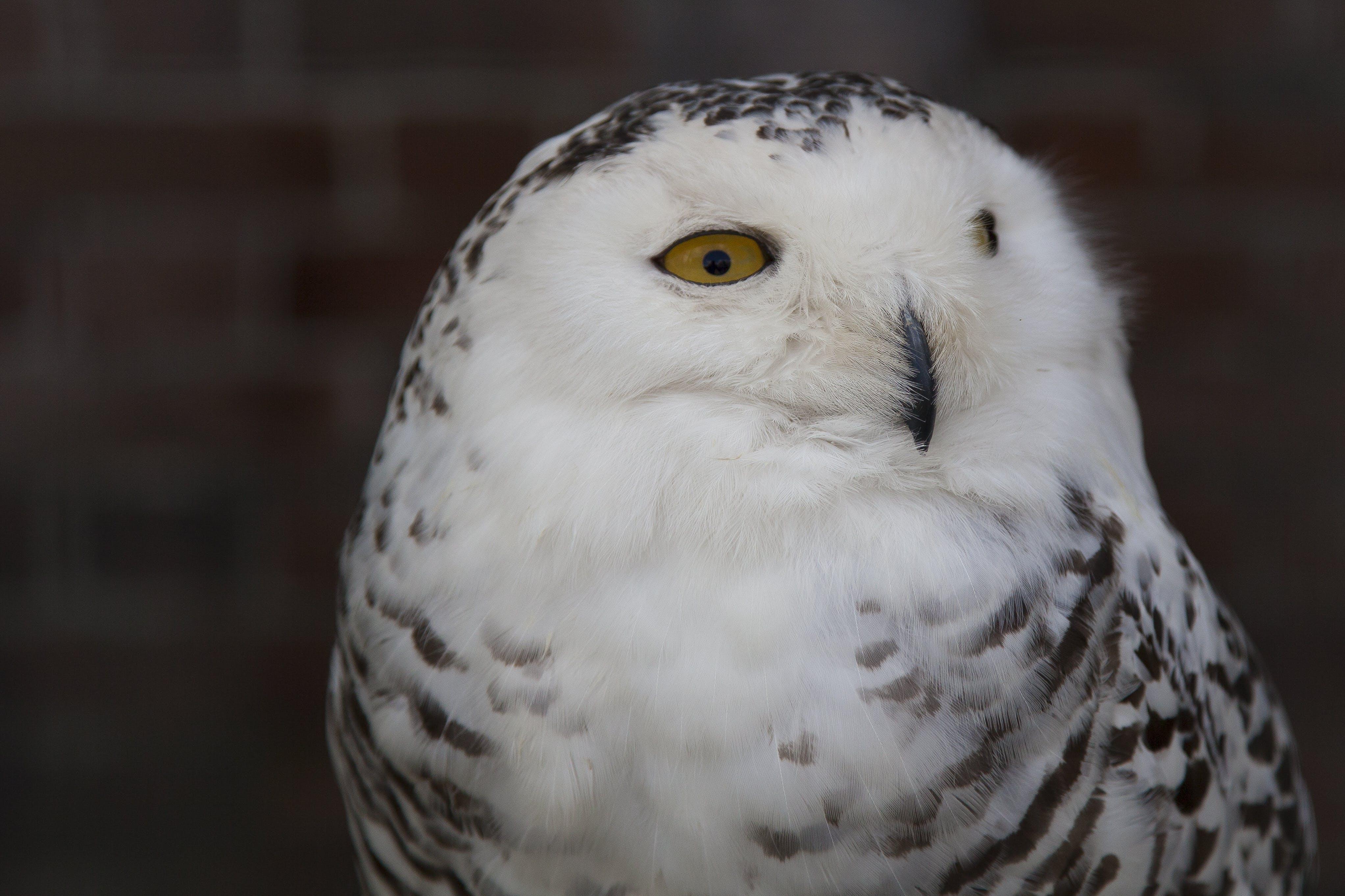 Free stock photo of bird, owl