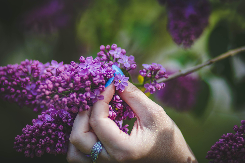 Fotos de stock gratuitas de anillo, botánico, color lavanda, colores