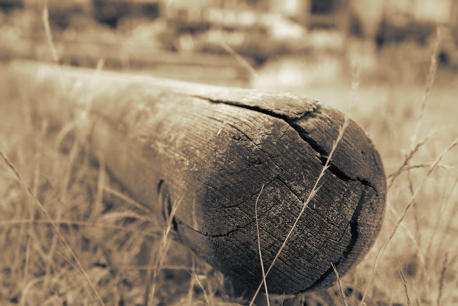 New free stock photo of wood, landscape, nature