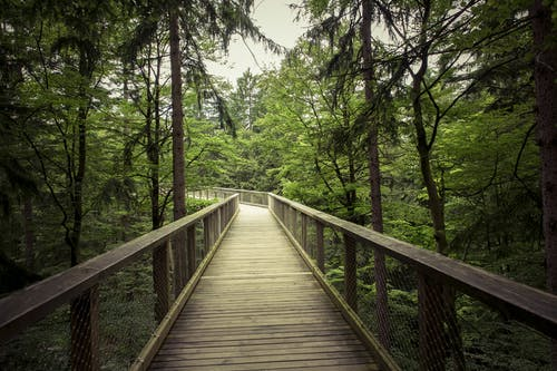 Free stock photo of bridge, daylight, environment, forest