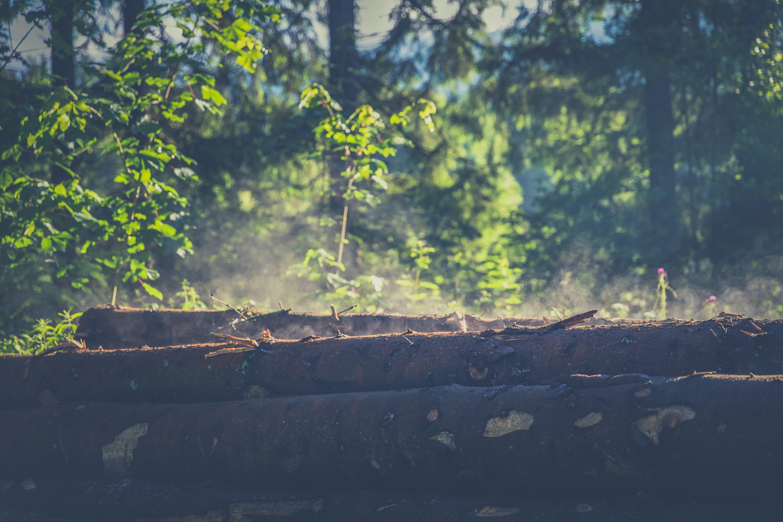 Three Tree Logs on Dirt