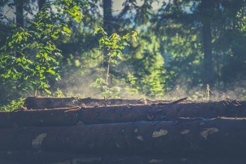 Immagine gratuita di alberi, ambiente, boschi, colorato