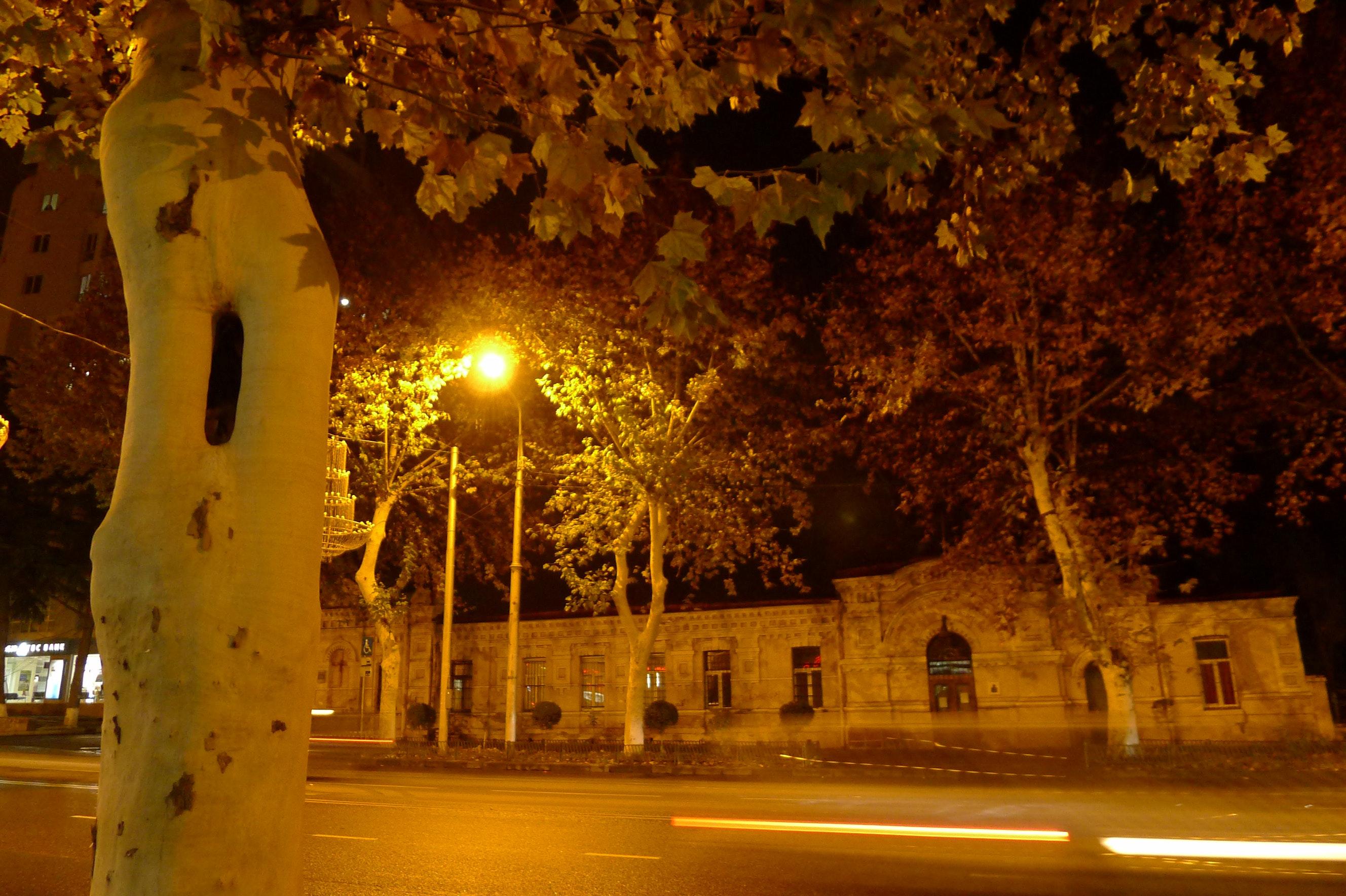 Free stock photo of #Tree, city lights, empty street