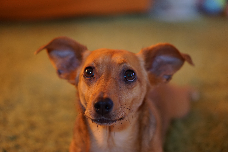 Free stock photo of #dog, adorable, animal, animal portrait