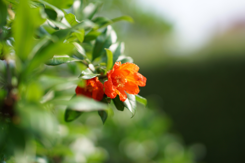 Free stock photo of beautiful flowers, flora, flower, green