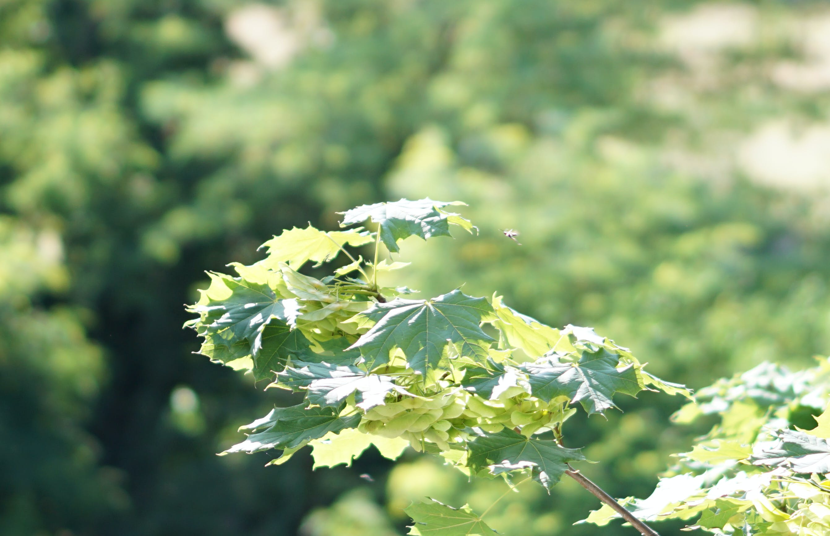 Free stock photo of #Tree, ecology, environment, focus
