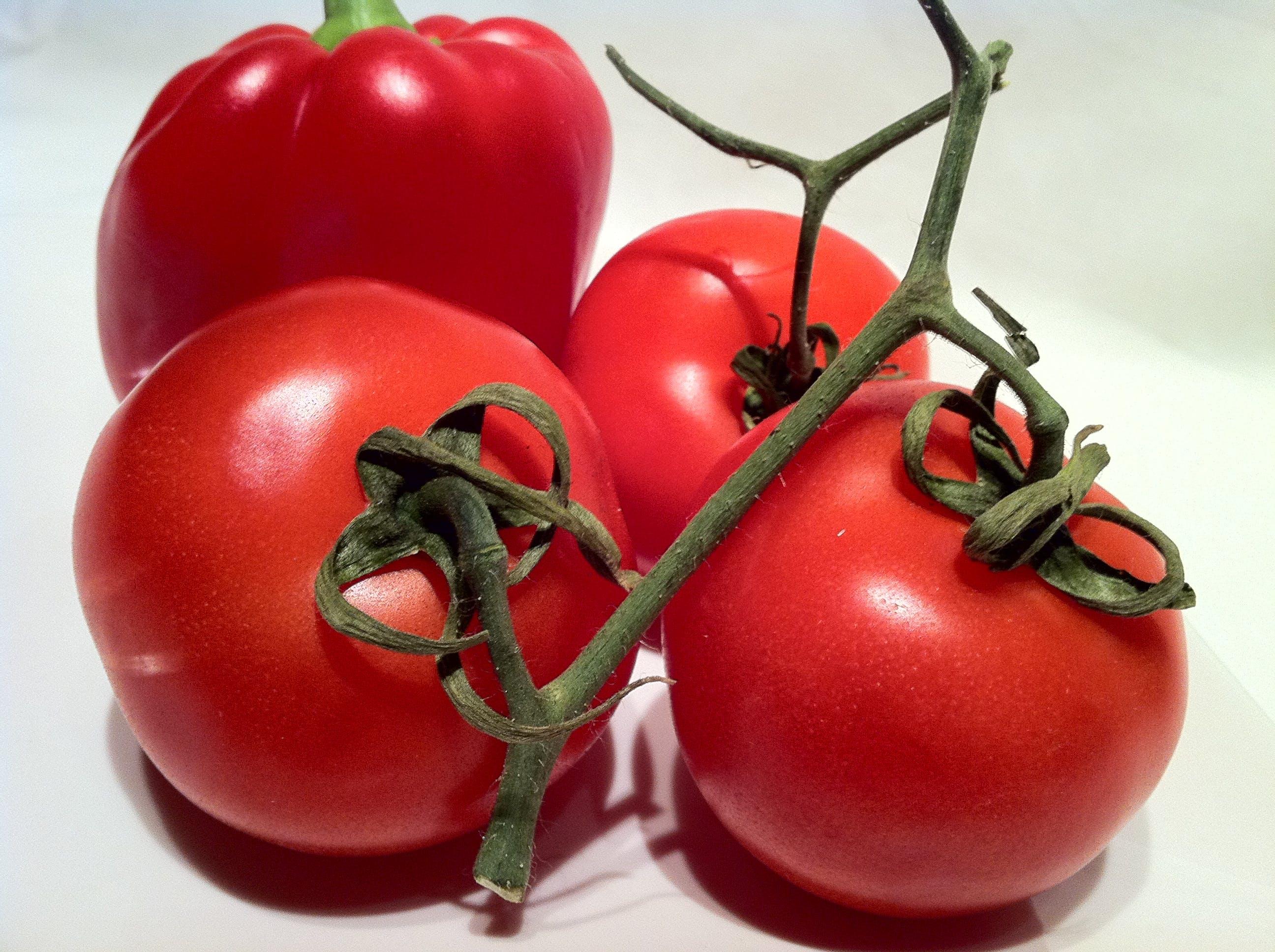 Free stock photo of tomatoes