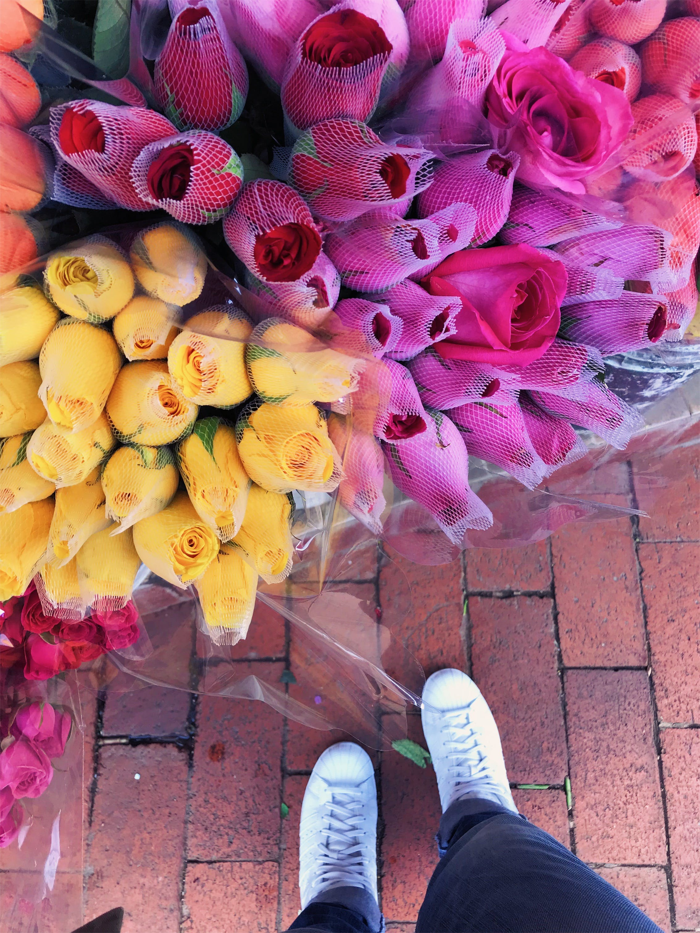 Free stock photo of love, flowers, bricks, amor