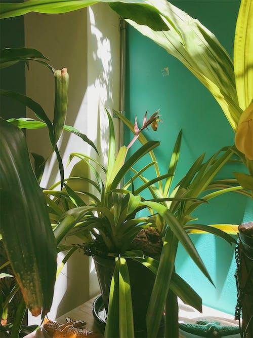 Ảnh lưu trữ miễn phí về cận cảnh, chậu hoa, màu, màu xanh lá