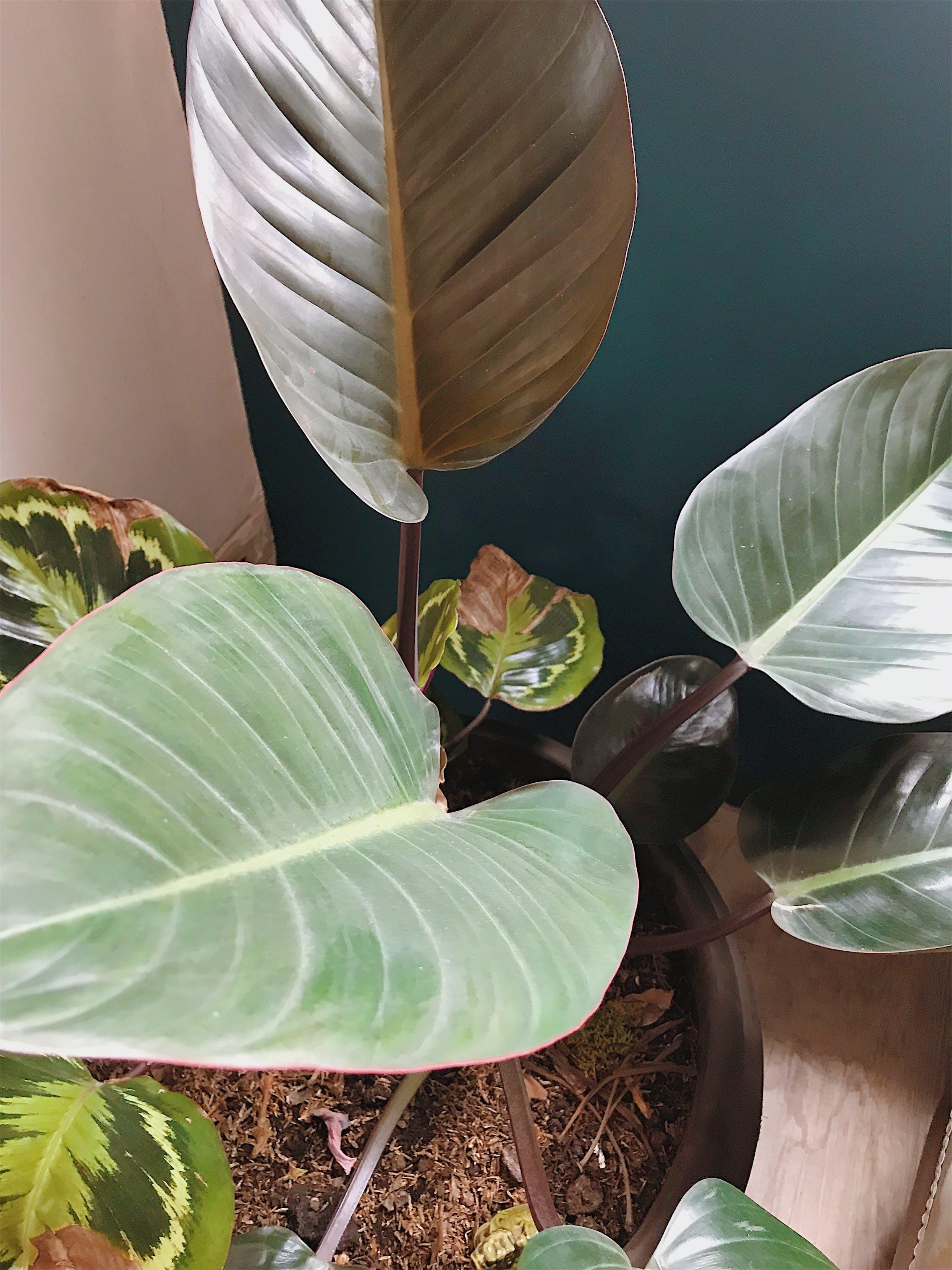 Free stock photo of nature, flowers, green, interior