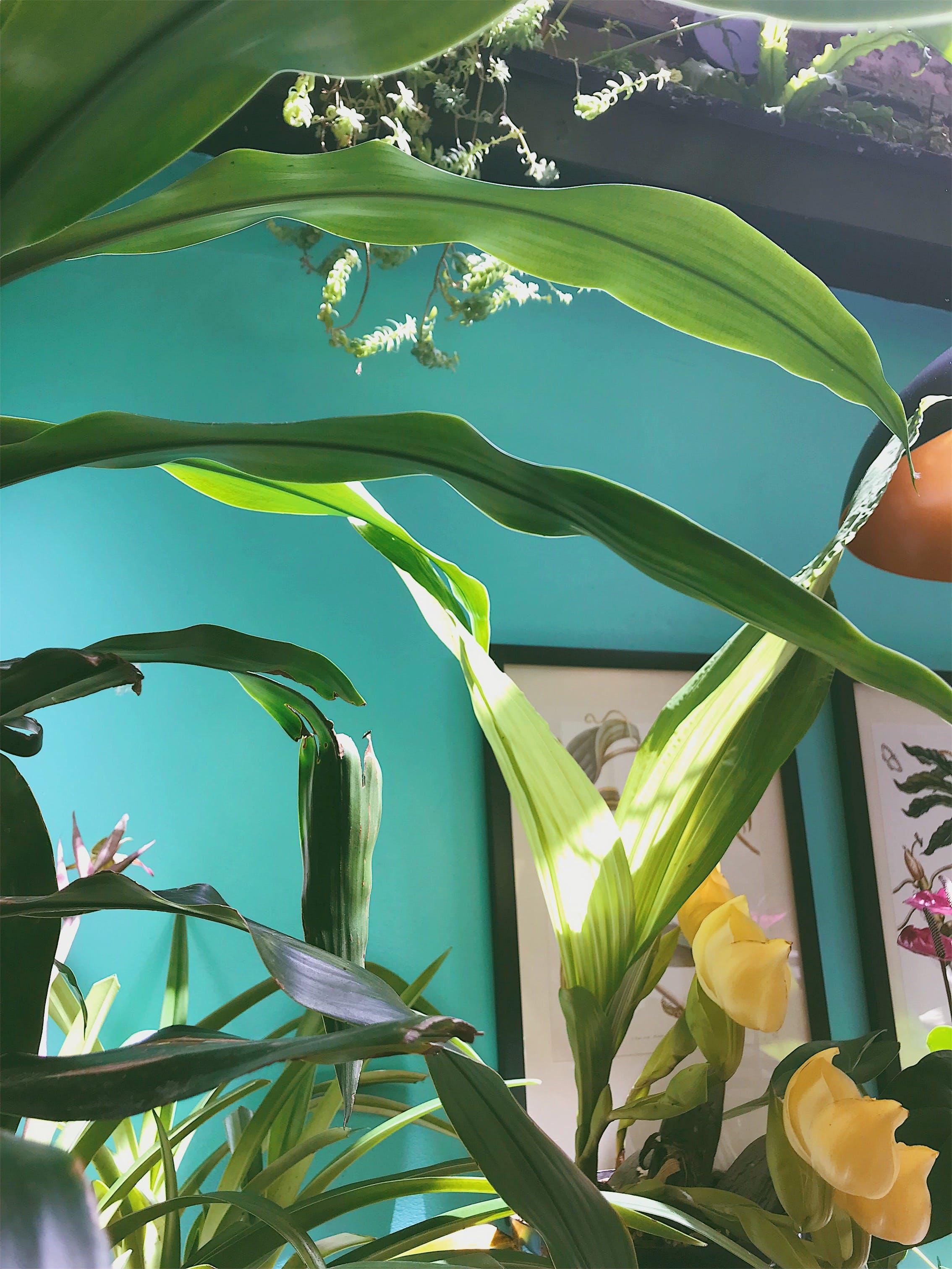 Gratis lagerfoto af blomst, blomster, botanisk, farver