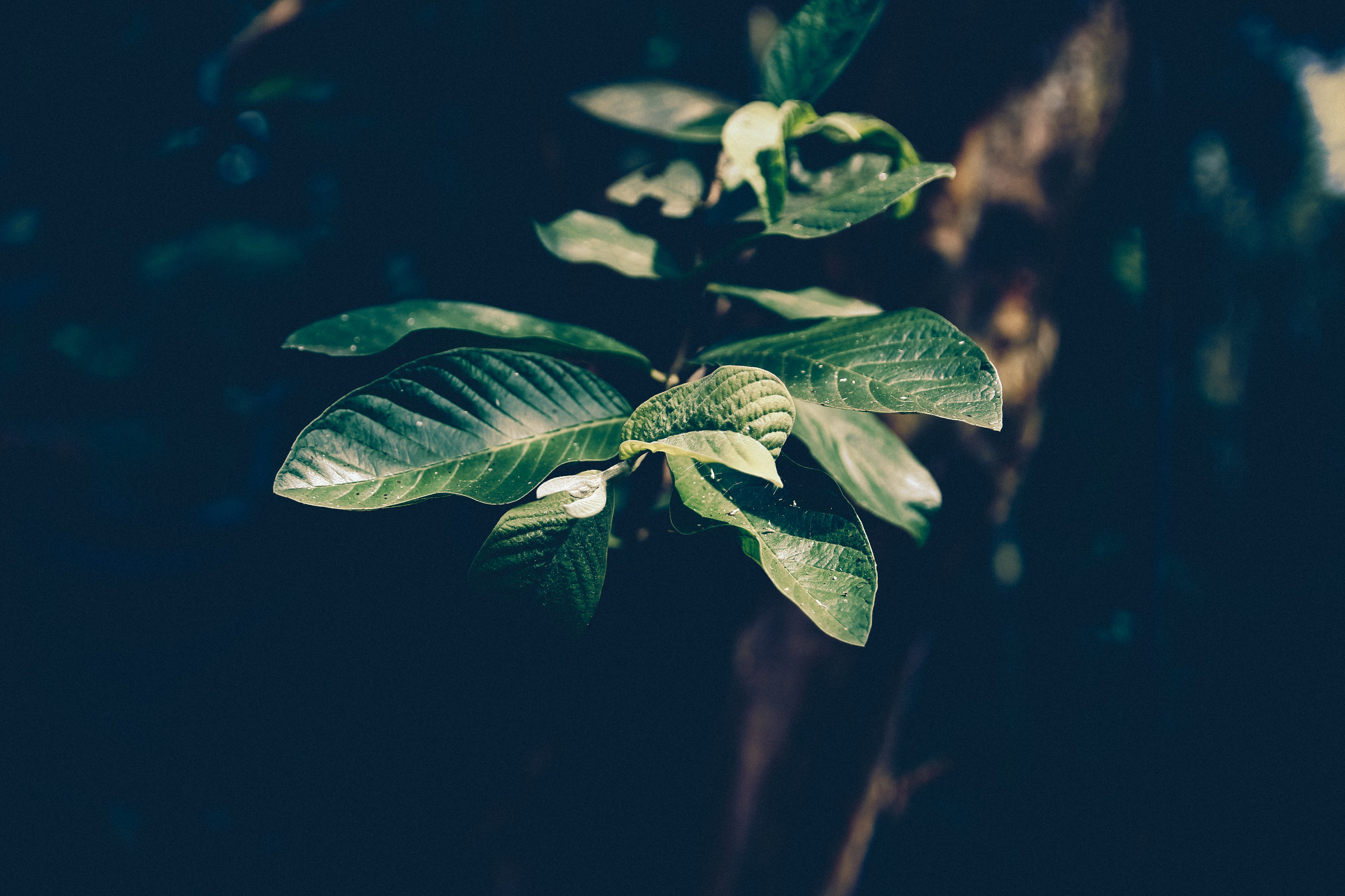 Selective Focus Photography Green Leaf Plant